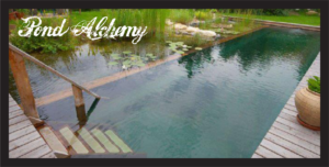 Miami Natural Swimming Pools