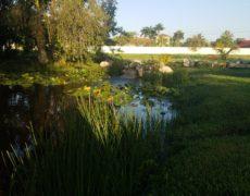 Natural Pond by Pond Alchemy