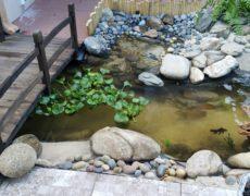 Lazy River by Pond Alchemy