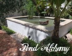Turtle Pond Miami