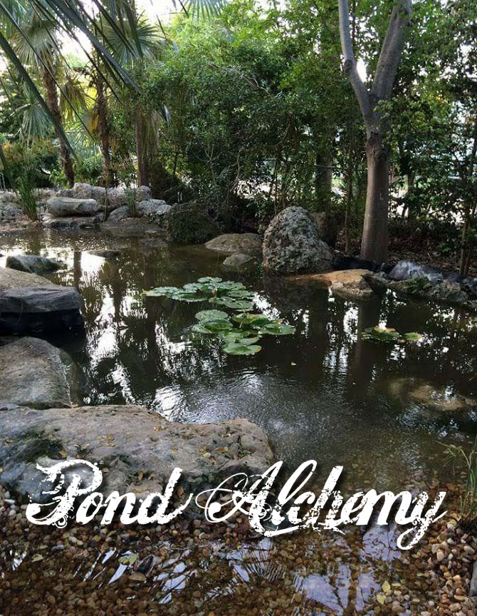 PONDS AND NATURAL SWIMMING POOLS - Pond Alchemy
