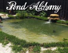 Pond Alchemy