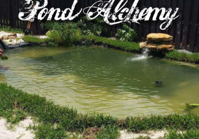 Pond Alchemy