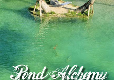pond alchemy miami